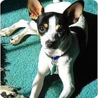 Adopt A Pet :: Ranger - Oklahoma City, OK