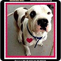 Adopt A Pet :: Jackson (courtesy) - Scottsdale, AZ