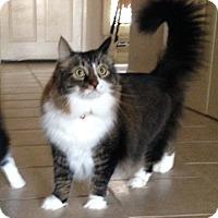 Adopt A Pet :: Bailey-Joey - Laguna Woods, CA