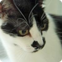 Adopt A Pet :: Pippi - Vancouver, BC