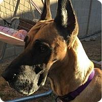 Adopt A Pet :: Sonya - Mesa, AZ