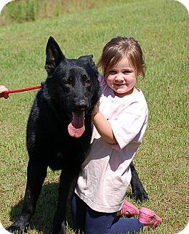 German Shepherd Dog Mix Dog for adoption in Preston, Connecticut - Journey