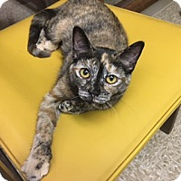 Adopt A Pet :: London - Medina, OH