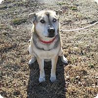 Adopt A Pet :: Penelope - West Warwick, RI