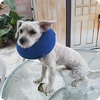 Adopt A Pet :: Jake - Fullerton, CA