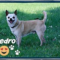 Adopt A Pet :: Pedro - Marion, KY