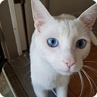 Adopt A Pet :: Elwood - Quail Valley, CA
