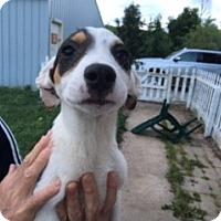 Adopt A Pet :: Tadpole - Traverse City, MI