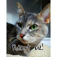 Adopt A Pet :: Spanky - Spokane, WA