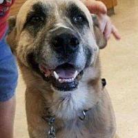 Adopt A Pet :: Trevor - Wymore, NE