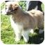 Photo 2 - Schnauzer (Miniature) Mix Puppy for adoption in Provo, Utah - PIGGY