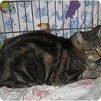 Adopt A Pet :: Joey - Riverside, CA