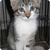Adopt A Pet :: Peter - Davis, CA