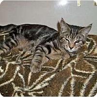 Adopt A Pet :: Greg - Secaucus, NJ
