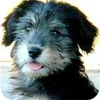 Adopt A Pet :: DIGIT - Wakefield, RI