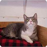 Adopt A Pet :: Monroe - El Cajon, CA
