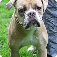 Adopt A Pet :: Chucky - Tinton Falls, NJ