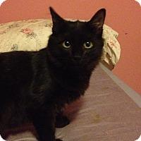 Adopt A Pet :: Zeus - Santa Rosa, CA
