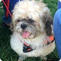 Adopt A Pet :: Eli - Ogden, UT