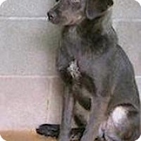 Adopt A Pet :: Dianah - Tahlequah, OK