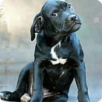 Adopt A Pet :: Fortune - Griffin, GA