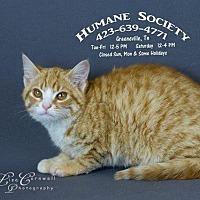 Adopt A Pet :: Kaboodle / AC-18458 - Greeneville, TN