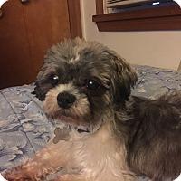 Adopt A Pet :: Magoo 9yr - Mentor, OH