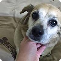Adopt A Pet :: Sweet Pea - Sharon Center, OH
