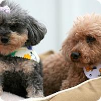 Adopt A Pet :: Jeze & Fasa - Holliston, MA