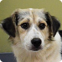 Adopt A Pet :: **JILL** MEET SEPT 23RD! - Mukwonago, WI