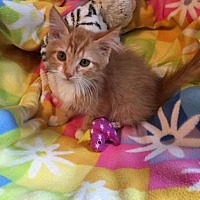 Adopt A Pet :: Honey - Lockport, NY