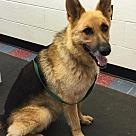 Adopt A Pet :: Pungo 5229