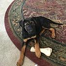 Adopt A Pet :: Skittles