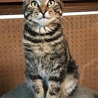 Adopt A Pet :: Sonny - Melbourne, FL