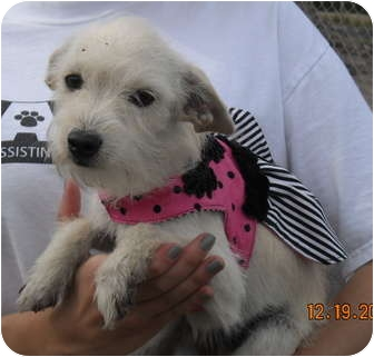 Terrier (Unknown Type, Small) Mix Dog for adoption in Corpus Christi, Texas - Bethany
