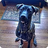 Adopt A Pet :: Champ 2 - Rockaway, NJ
