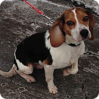 Adopt A Pet :: Toby - Wilmette, IL