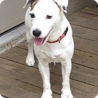 Adopt A Pet :: Coco in Houston - Houston, TX