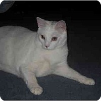 Adopt A Pet :: SKY - Little Neck, NY