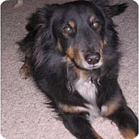 Adopt A Pet :: Henry - apache junction, AZ