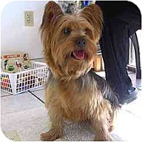 Adopt A Pet :: Trevor - GAINESVILLE, TX