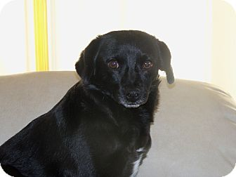 Terrier (Unknown Type, Small) Mix Dog for adoption in Apache Junction, Arizona - Mia