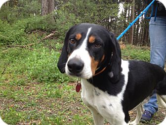 Hound (Unknown Type) Mix Dog for adoption in Lancaster, Pennsylvania - Kirby