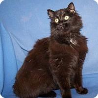 Adopt A Pet :: Tobi - Colorado Springs, CO