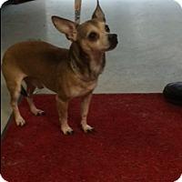 Adopt A Pet :: Scooby - Muskegon, MI