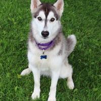 Adopt A Pet :: Grace - Manitowoc, WI