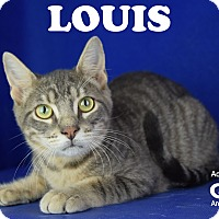 Adopt A Pet :: Louis - Carencro, LA