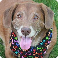 Adopt A Pet :: Paige - Garfield Heights, OH