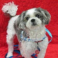 Adopt A Pet :: HUTCH - Eden Prairie, MN