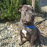 Adopt A Pet :: PAMELA - Fairfield, CA